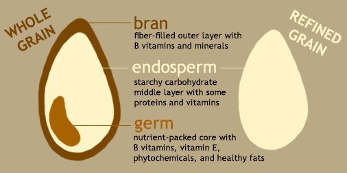 Grain of wheat showing the bran, germ and endosperm.
