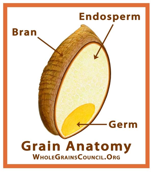 Wheat berry - bran, germ and endosperm.